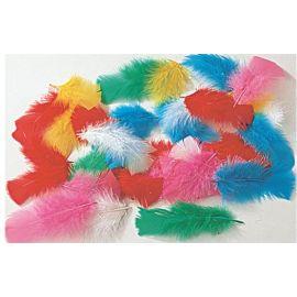 Plumes de couleur - Ogeo